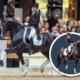 Embryo auction horse Glocks Total US Ferro