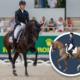 Embryo auction horse Blue Hors Zack Fürst Heinrich