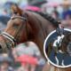 Embryo auction horse  Escolar Jazz