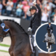 Embryo auction horse Revolution Tango